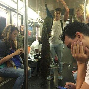 Pavoneggiarsi in metro