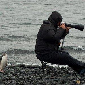 Pinguino beffardo