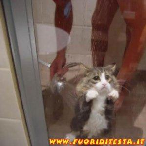 Povero gattino
