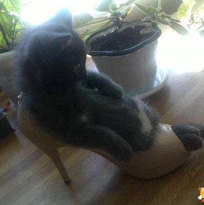 Questa gatta ama i tacchi alti