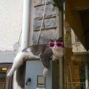 Questo gatto è un gran figo