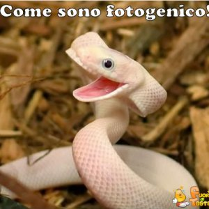 Serpente fotogenico