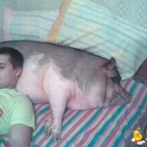 Soffice cuscino