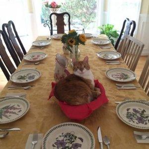 Sono pronto per il pranzo!