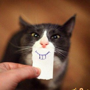 Sorriso felino