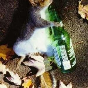 Topo ubriaco