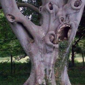 Un albero inquietante