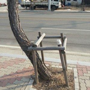 Un albero ribelle