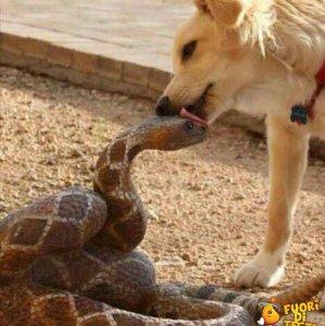 Un cane un po' confuso