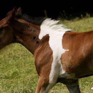 Un cavallo dentro il cavallo