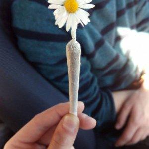 Un fiore particolare