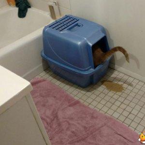Un gatto geniale