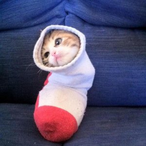 Un gatto nel calzino