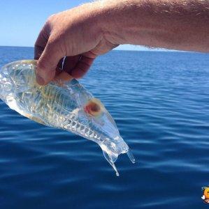 Un pesce trasparente