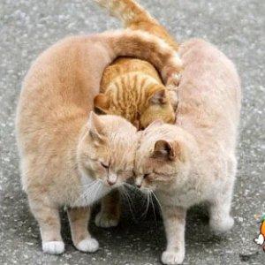 Un trio affettuoso