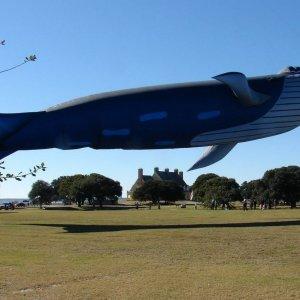 Una balena volante