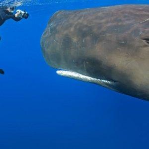 Una foto alla balena