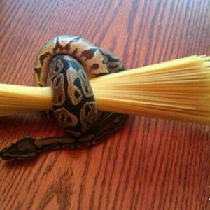 Voglio solo un po' di spaghetti
