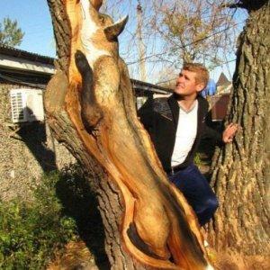 Volpe scolpita sul legno