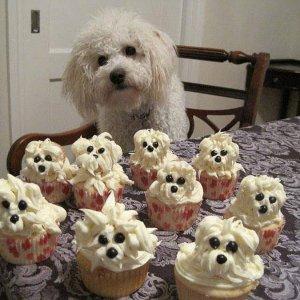 Vuoi una cupcake?
