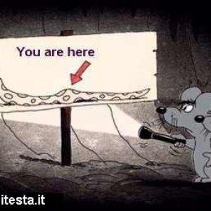 Siete qui