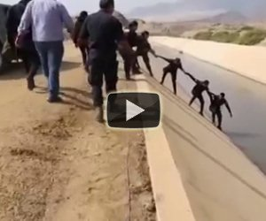 Formano una catena umana per salvare un cane in pericolo