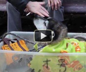 Ecco come dovrebbero essere trattati tutti i cani anziani