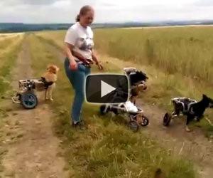 Una donna gioca in campagna con un gruppo di cani speciali