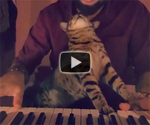 Ecco come questo gatto suona il pianoforte col suo padrone