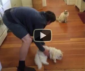 Fa scivolare il gatto sul pavimento, la sua reazione è meravigliosa