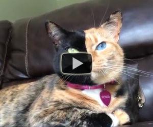 Il gatto con due facce