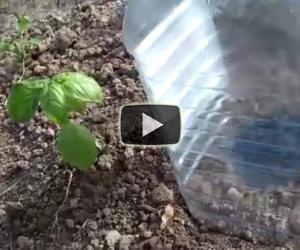 Ecco in che modo irrigare risparmiando acqua