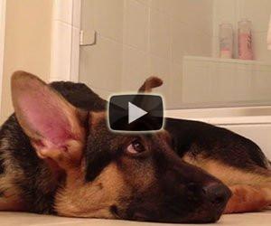 Questo cane non sopporta il padrone che canta, ecco cosa fa...