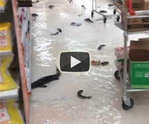 Pesci che nuotano tra le corsie di un supermercato