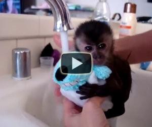 Piccola scimmia fa il bagnetto