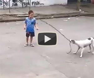 Questo cane è un perfetto compagno di giochi