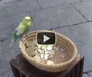 Uccellino chiede l'elemosina in strada