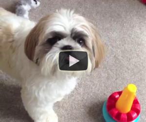 Mette un giocattolo di fronte al suo cane, la sua reazione è incredibile