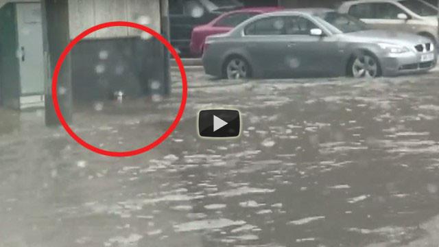 Il gattino è spaesato durante l'alluvione, un ragazzo lo salva