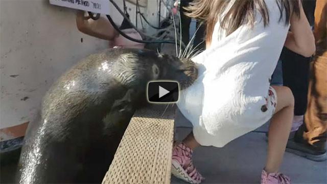Il terribile momento in cui il leone marino trascina una bimba in acqua