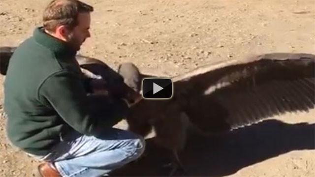 Condor incontra l'uomo che un anno prima gli ha salvato la vita