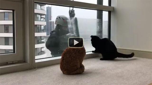 Questi gatti amano l'uomo che lava i vetri